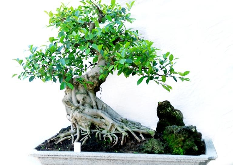 Sử dụng cây cảnh lọc không khí khi chuyển nhà
